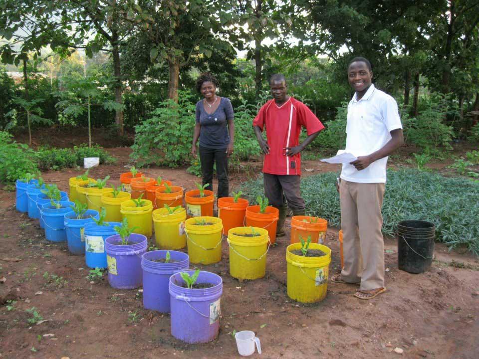Tansania-pflanzenweb