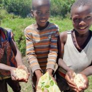 Afrika setzt auf Heilpflanzen gegen Corona
